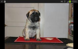 2013-11-25-puppy-mette