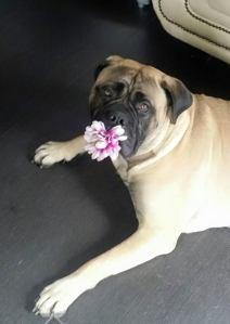 2015-06-27-mette-het-bloemenmeisje