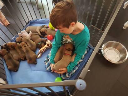 2016-05-28-in-de-puppyren