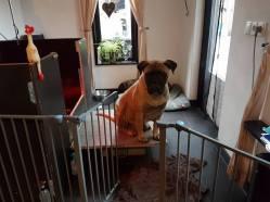 2016-06-02-mette-beschermd-haar-puppys