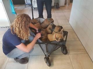 2016-06-21 Bij de dierenarts voor de check en enting