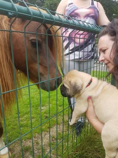 2016-06-22 Wat is dat dan voor langharige grote hond