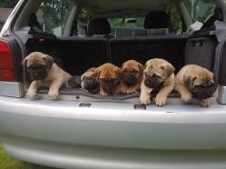 2016-06-22 Wij gaan naar de hondenschool