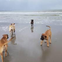 2016-11-06 met allemaal op het strand