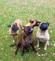 2016-11-20 Uitwaaien op de hondenschool