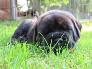 2017-08-27 Op het gras slapen