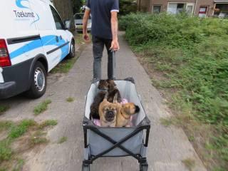 2017-09-07 Op naar de dierenarts voor de eerste enting