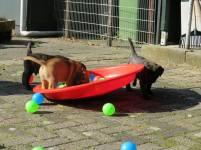 2017-09-10 Spelen op de hondenschool (1)