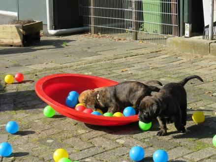 2017-09-10 Spelen op de hondenschool (2)