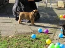 2017-09-10 Spelen op de hondenschool (3)