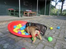 2017-09-10 Spelen op de hondenschool