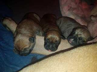 2019-02-16 Pups geboren